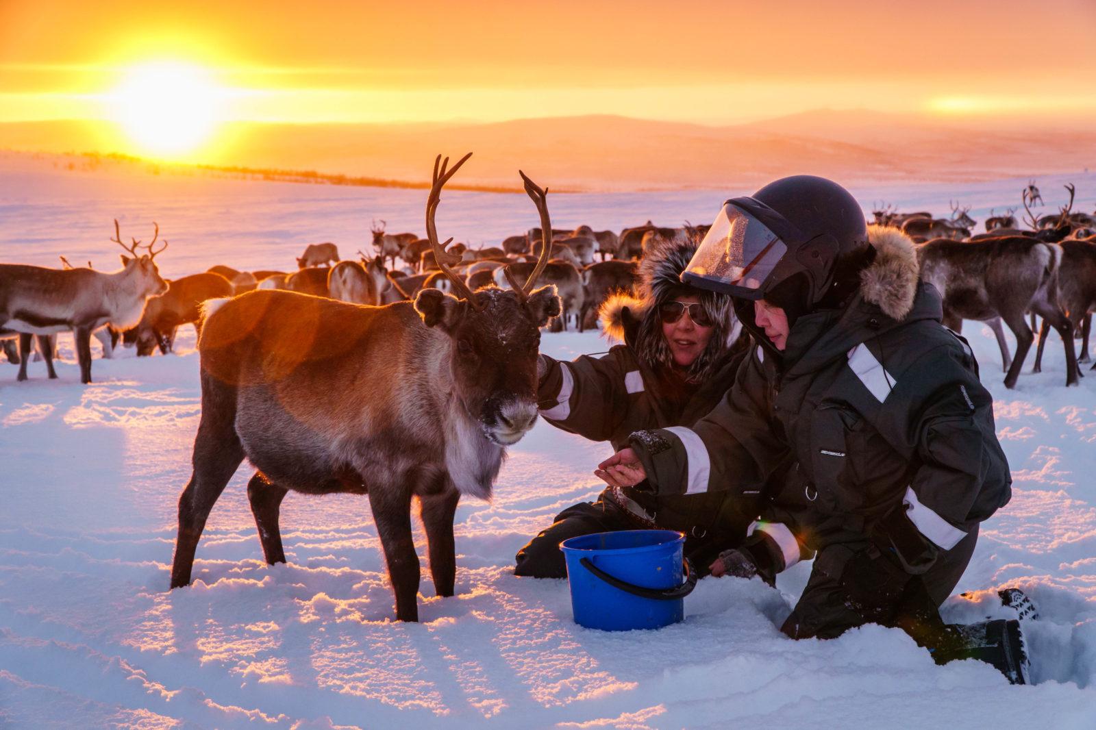 Arctic Land Adventure poroemäntä