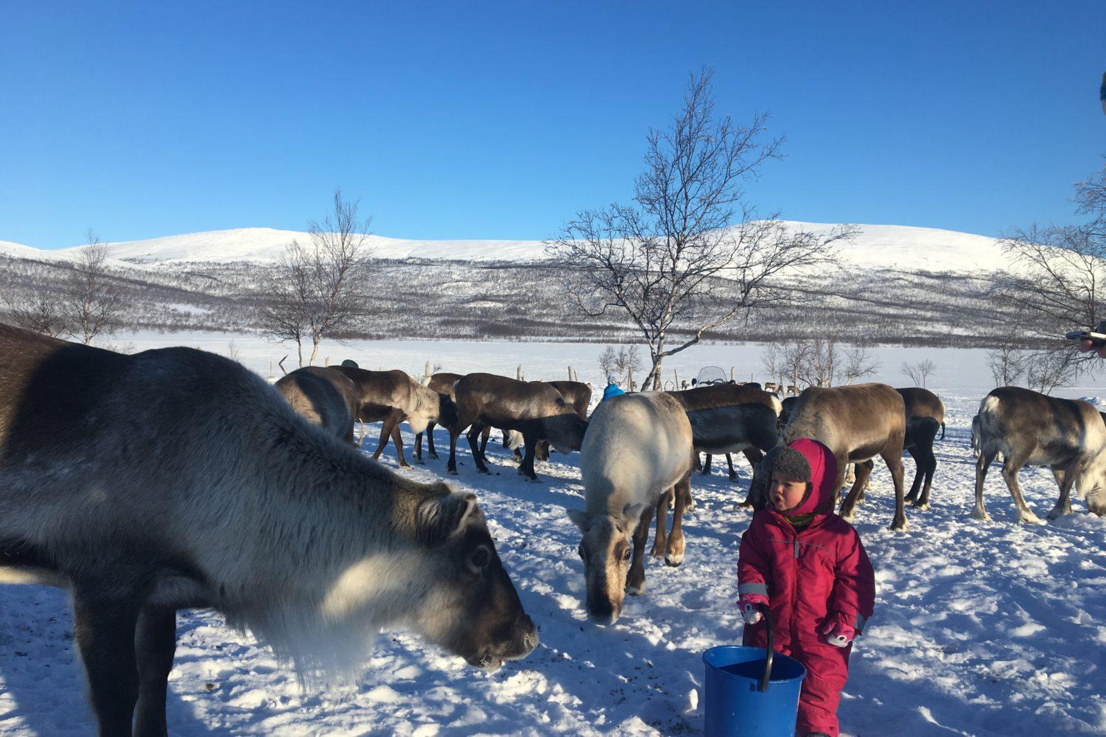 Arctic Land Adventure porotilavierailu